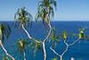 Pandanus tectorius and the Pacific Ocean (Hala Tree) (AGrinberg) Tags: hawaii 63344halatree hala tree kauai pandanus tectorius pacific ocean kalalautrail napalicoast