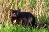 Black Cat (KorneelPhotography) Tags: cat blackcat canon belgium 30d tamron 18200mm nature day overdag buiten natuur zwartekat kat gras dier huisdier alken outdoor