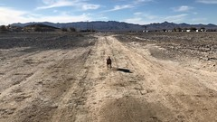 2017-12-31 GOPS Tecopa NYE (136) (MadeIn1953) Tags: 2017 201712 20171231 greatoutdoorsgo camping go gops greatoutdoorspalmspringsgops california inyocounty tecopahotsprings pete snickers annie running