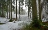 Hermitage woods (peterslaing) Tags: dunkeld perthshire hermitage scotland trees snow winter
