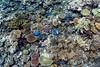 Pristine coral reef (view large!)    Mana Island (David Marriott - Sydney) Tags: fiji fj mana island reef coral underwater snorkel ikelite