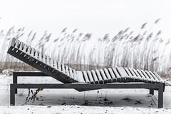 Ruheliege (Friedhelm Hofstetter) Tags: deu deutschland ellertshäusersee franken stadtlauringen schilf winter