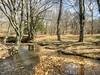 Meandering Stream 2 (esywlkr) Tags: creekwaterstream brp nc wnc blueridgeparkway northcarolina landscape