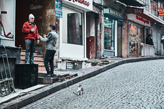 Istanbul, day 7 (kaneko_ryo) Tags: eos5dmarkⅳ ef2470mmf28liiusm turkey istanbul cat