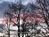 Winter Silhouette (john shortland) Tags: trees clouds sunset black sky branches twigs pink grey winter