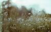 little world (Lore Stars) Tags: film naturaleza nature daisies 35mm analógica pentaxmv autochinon50mmf17 bokeh dof lorestars expired field countryside ferraniasolaris galicia