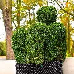 I want to break free! (violetchicken977) Tags: gorgeousgreenthursday greenthings topiary publicparks