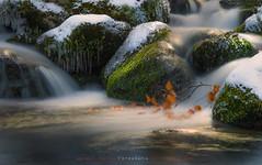 "Agua, musgo, nieve, hielo y luz //Water, moss, snow, ice and light (ANDROS images) Tags: andros images photos fotos fotoandros ""androsphoto"" ""fotoandros"" lugares places ""sitiosespeciales"" ""franciscodomínguez"" interesante naturaleza ""naturalezaviva"" ""amoralanaturaleza"" ""imágenesdenuestromundo"" ""sólotenemosunatierra"" ""planetatierra"" ""amarlatierra"" ""cuidemoslatierra"" luz color tonos ""portierrasespañolas"" ""nuestro ""unahermosatierra"" ""reflejosdeluz"" pasión viviendo ""pasiónporlafotografía"" miradas fotografías ""atravésdelobjetivo"" ""elmundoenimágenes"" pictures androsphoto photoandrosplaces placesspecialsites interesting differentnaturelivingnature loveofnature imagesofourworld weonlyhaveoneearthplanetearth foracleanworldlovetheearth carefortheearth light colortones onspanishterritoryourworld abeautifulearth lightreflection ""living passionforphotographylooks photographs throughthelens theworldinpicturesnikon ""nikon7000"" grupodemontañairis androsimages franciscodomínguezrodriguez agua musgo hielo nieve"