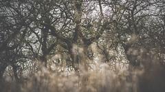 PB_012618_12 (losing.today) Tags: brianyoung oregon pacificnorthwest portland pdx portlandoregon portlandor winter nature outdoors naturepark plantlife plants moodyseason darkseason losingtoday
