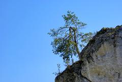 482  I grow on a rocky ground (Hejma (+/- 5400 faves and 1,7 milion views)) Tags: skały wapienne drzewa krzewy światłocień niebieskie