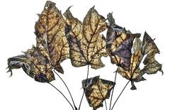 nature's language ῼ 2 (DeZ - photolores) Tags: leafs guelphcanada hdr nikon nikond610 tamron90mmf28 dez details macro nature'slanguageωιseries