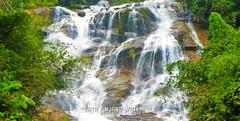 P1030397P2a (cth2206) Tags: cameron highland perak ipoh mossy forest malaysia boh tea garden lata kinjang