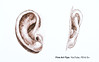 How to Draw an Ear With Pen & Ink - Narrated