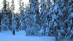 Trysil januar 2017 (Rune Lind) Tags: trysil januar winter vinter snø snow alpin alpint skikjøring norge norway skiing downhill resort skistar sun sol trær vinterlandskap landscape eventyrlandskap eventyr landskap 2018