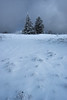 Kandel (beatriceverez) Tags: kandel schwarzwald waldkirch blackforest trees snow foreground winter