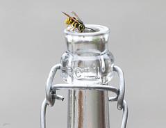 "(kunstschieter) Tags: wasp bottle grappa ""abottlefilledwithgrappaisafeastforwasps"" inabottle macromondays"