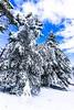 Monte Perone (elenacaldarera) Tags: neve bianco monte monteperone isoladelba elba