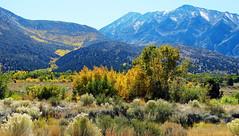 Autumn in Sierra Nevada Foothills, CA 10-17 (inkknife_2000 (8.5 million views +)) Tags: sierranevadarange sierranevadafoothills fallcolors leaveschanging autumn dgrahamphoto california usa landscapes mountain gold fallcolor