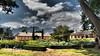 Cape Wine Farms (jan-krux photography - thx for 2.9 Mio+ views) Tags: wine farm wein camphor kampfer tree baum westerncape westkap southafrica suedafrika omd em1 olympus helderberg berge mountains