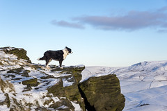 Lookout (Keartona) Tags: poppy pops dog bordercollie rocks wind view viewpoint southhead derbyshire peakdistrict highpeak hills kinderscout hayfield landscape winter bluesky sky outcrop nature december snowy snow
