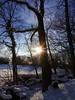 Winter Sunlight in the Forest (swetlanahasenjäger) Tags: elisenhein greifenwald buche wintersonne februar greifswald mecklenburgvorpommern deutschland coth damn thesunshinegroup saariysqualitypictures amazingimpressionsofnature coth5 sta fantasticnature