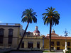 Flirting Palms (Nicote) Tags: la orotava is town municipality northern part tenerife one canary islands spain