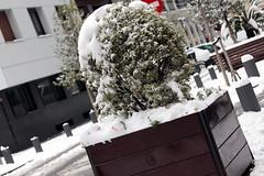 BilbaoNevado2018_0104 (otxolua (Josu Garro)) Tags: bilbao nevada nieve 2018 febrero nevado
