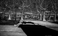 Un cavalier qui surgit dans la ville..../ A horserider who appears in the town... (vedebe) Tags: noiretblanc netb nb bw monochrome rue street ville city urbain urban chevaux statue architecture