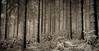 Homeworld  D`ni (PetschoX5) Tags: petscho freedomstreaming deutschland germany canon 700d fotografie photography myst cyan cyansworld atrus catherine yessha dni weiss white schnee snow wald wälder forest nebel fog tannenbaum