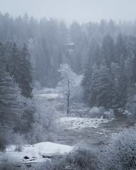Nautela rapids (tommi.vuorinen) Tags: lieto turku finland landscape nature tree water rapid winter mist fog mood atmosphere forest river snow cabin pine dead bush frosty