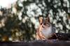 Al solecito (arapaci67) Tags: atardecer gatos cat naturephotography mascotas canon70d canon