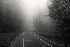 _MG_2545_Pbw (grzegorz_63) Tags: bw autumn mist fog road trees perspective outside canon70d