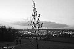 Elland road football ground bokeh. (The friendly photographer.) Tags: artistic britain blackandwhite blackwhite bw biancoenero brilliant blancoynegro blanco blancoenero d7100 dark england enblancoynegro ennoiretblanc evening flickrcom flickr football bokeh google googleimages gb greatbritain greatphotographers greatphoto image inbiancoenero interesting leeds ellandroad ellandroadstadium leedsunited mamfphotography mamf monochrome nikon nikond7100 noiretblanc noir northernengland negro north photography photo pretoebranco photograph photographer panorama panoramic schwarzundweis schwarz stadium trees uk unitedkingdom upnorth united urban westyorkshire yorkshire zwartenwit zwartwit zwart