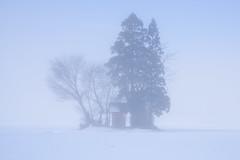 In Snow (kat-taka) Tags: ã¬ãã snow tree shrine japanese white winter blue nature