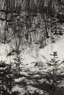 Winter landscape in Pyeongchang (Nikon F2s, Kodrak Tri-X 400, Tenetal Ultrafin)