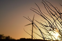 (matthewcaddickphotography) Tags: blackpool photo photography fleetwood nature reserve image picture pictureoftheday sunset grass windmill houses black white bw blackwhite street depth camera wow dark light nikon d3300