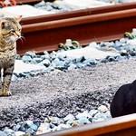 Ojalá alguien que me mirase como Scar mira a su churri  #gatos #gatoscallejeros #cats #photocats #instacats #neko #meow #gatze #gatto #koshka #catsofworld #catsofinstagram #streetcats #chat #love #loveisintheair #amor thumbnail