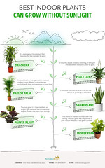 01 (NaturesBuggy) Tags: buy indoor plants online plant india