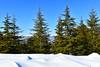 (cengizskpl) Tags: tree green sky blue white snow nature montain toroslar pinetree forest nikon 7200