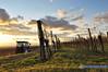 Niederösterreich Weinviertel Niederrussbach_DSC0058A (reinhard_srb) Tags: niederösterreich weinviertel niederrussbach wein winzer dorf wagram weingarten weinstock rebe winter sonnenuntergang stimmung wolken traktor arbeit tag heimfahrt