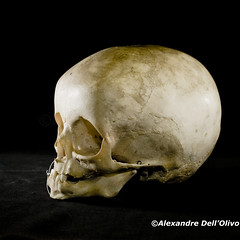 Homo sapiens NN_DSC0664 (achrntatrps) Tags: crânes skulls bones os animals nikkor d800 pce45mmf28 alexandredellolivo suisse lachauxdefonds lycéeblaisecendrars collection sb900 sb800 achrntatrps achrnt atrps photographe photographer flash human humain mensch crâne homosapienssapiens hominidae homininae primates hominidés hominids