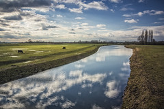 Elst, Space for the river 2 (wimvandemeerendonk, off on a trip!) Tags: river sun riverscape lek elst spacefortheriver ruimtevoorderivier clouds cloudscape cloud landscape light netherlands nederland nature outdoors outdoor panorama provincieutrecht reflection ripples sony sky tree trees thenetherlands wimvandem water wetlands grass field golddragon