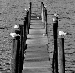 Ambleside on a dull day. (Maria .... on here to learn and be inspired.) Tags: ambleside water nature mono blackandwhite birds pier wood lake lakes