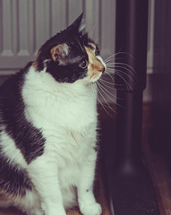 What are you saying? (donnicky) Tags: cat closeup floor home indoors involved pet publicsec sitting лилу