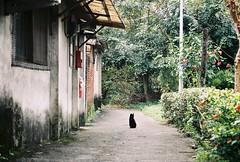 (YL.H) Tags: 蟾蜍山 煥民新村 台北 底片 貓 analog film taiwan taipei canon 500n agfa cat