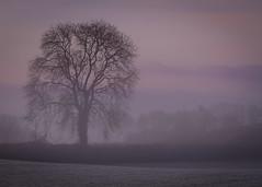 Misty Tree (Explored) (Claire Edwards Photography) Tags: countymeath frost ireland meath tree mist sunrise