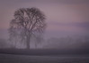 Misty Tree (Explored) (Claire Edwards Photography) Tags: countymeath frost ireland meath tree mist sunrise