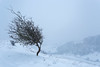 Swaledale Snow (matrobinsonphoto) Tags: swaledale deepdale deep dale north yorkshire national park applegarth richmond countryside outdoors landscape nature rural valley hill hills snow blizzard snowy winter wintry frozen scenic uk scenery natural cold tree lone hawthorn silhouette weather