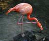 Key West (Florida) Trip 2017 0040Ri 5x6 (edgarandron - Busy!) Tags: florida keys floridakeys keywest butterflyhouse conservatory bird birds flamingo