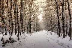 Camino en invierno (allabar8769) Tags: bosque invierno kdd nieve palencia photopaisaje rutadelospantanos velilladelríocarrión árboles